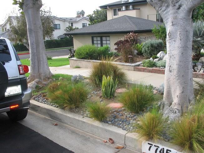 LA Absurd: City Cites Homeowner for Drought-Resistant Plants