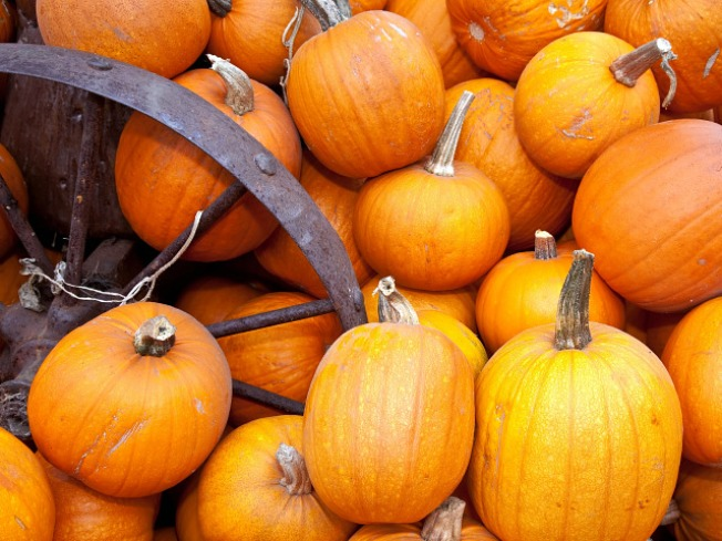 Insect Fair, Pumpkin Beer, Gourds Galore