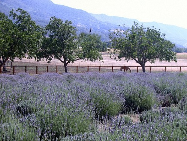 Worth the Drive: The Lavender Inn