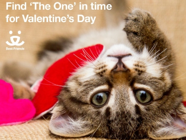Looking for The One on Valentine's Day? Adopt a Pet