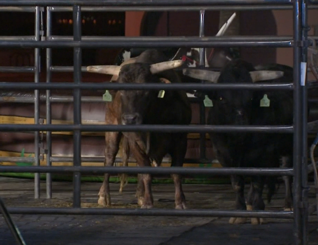 """Bulls on the Beach"" is in Huntington For Inaugural Bull-Riding Competition"