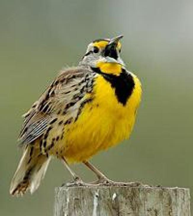 Meadows on the Connecticut-Massachusetts Border Saved for Birds