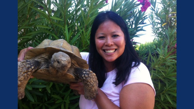 Missing Peninsula Tortoise Found, Returned to Owner