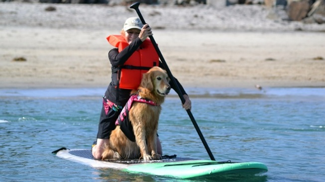 Learn to Paddleboard or Surf with Your Pup
