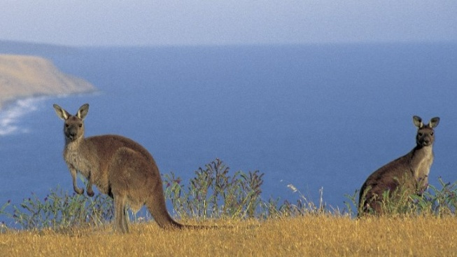 Finding Down Under Up Here