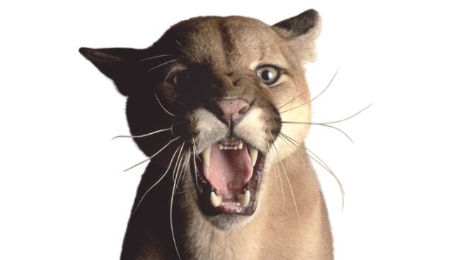 Man Survives Mountain Lion Attack After Rescue by Mother Bear