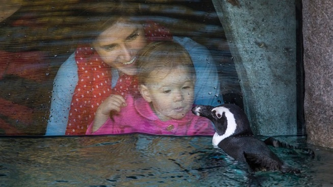New: San Diego Zoo Penguin Cam