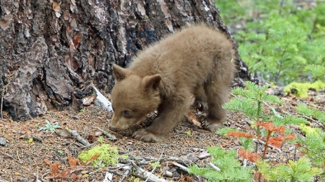 Yosemite New: Keep Bears Wild