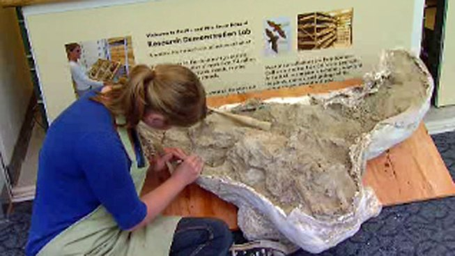 Caltrans Workers Unearth Ice-Age Bison Fossil in San Diego