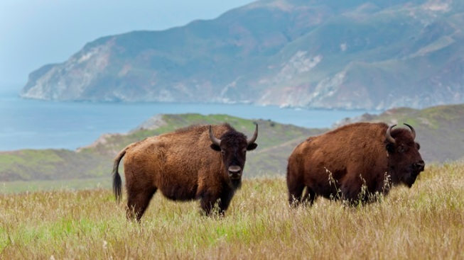 Support Your Local Bison: Catalina Island Conservancy Ball
