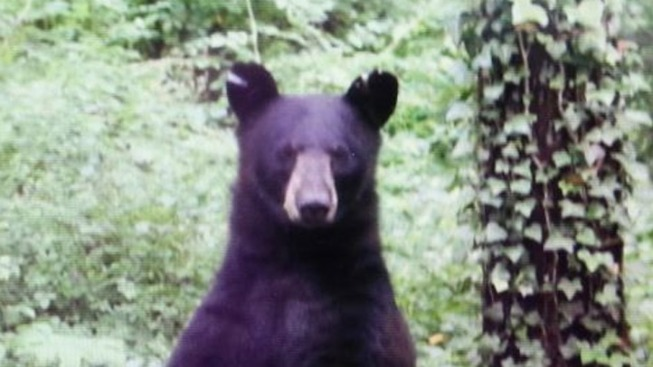 2 California Men Accused of Killing Black Bear Near Lake Tahoe