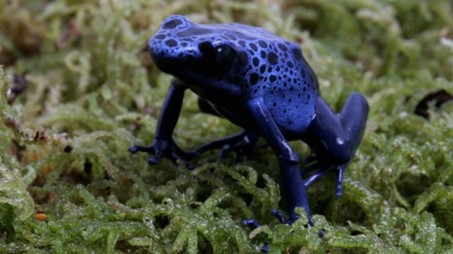Aquarium New: 'Frogs: Dazzling and Disappearing'