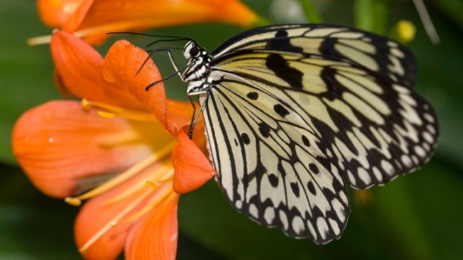Butterfly Fun at San Diego Zoo Safari Park