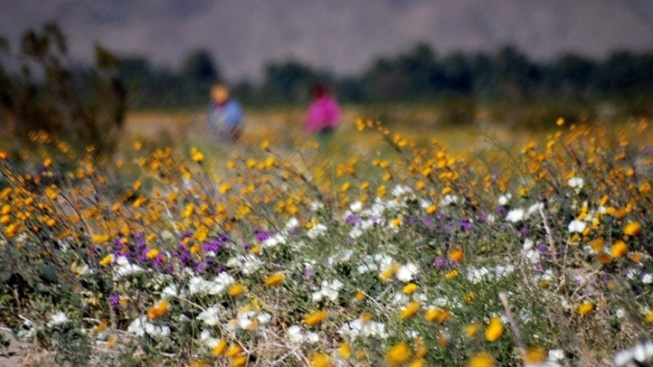 Anza-Borrego Photo Contest: Voting Now Open