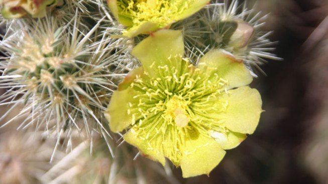 On the Horizon: Petals in the Desert