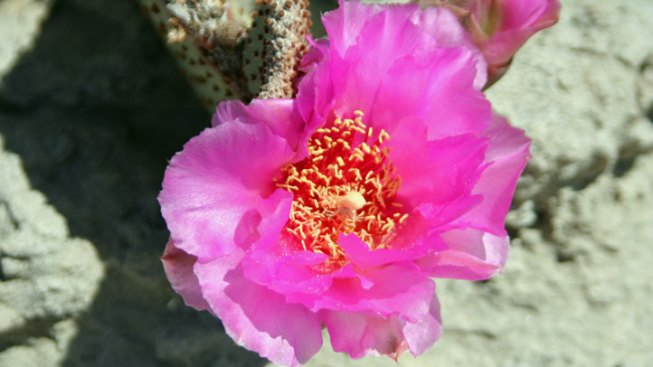 Anza-Borrego: It's Go Time, Flower People