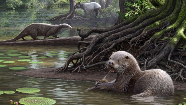 Giant Ancient Otters: NHM Scientist Paper