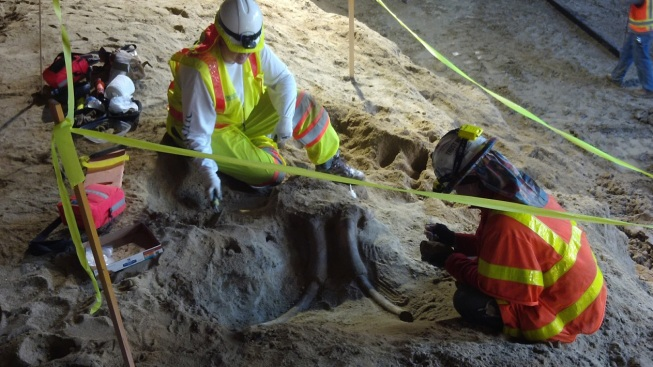 Fossils Including That of Monster Sloth Unearthed at LA Metro Construction Site