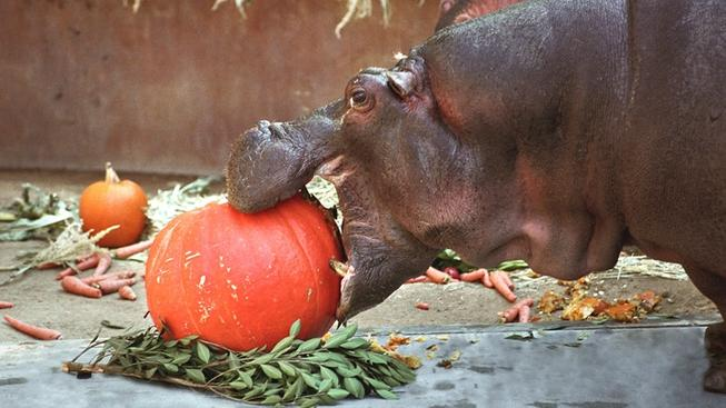 Hip, Hippo, Hooray: Boo at the LA Zoo Begins