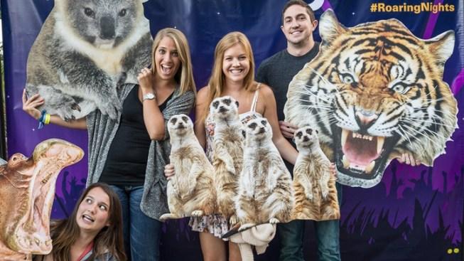 Tunes 'n Tails: Roaring Nights at LA Zoo
