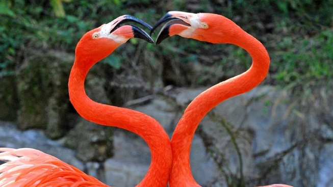 Valentine's at the Zoo