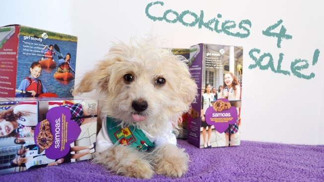 Sweet Adoption Fair: 'Cookies and a Critter'