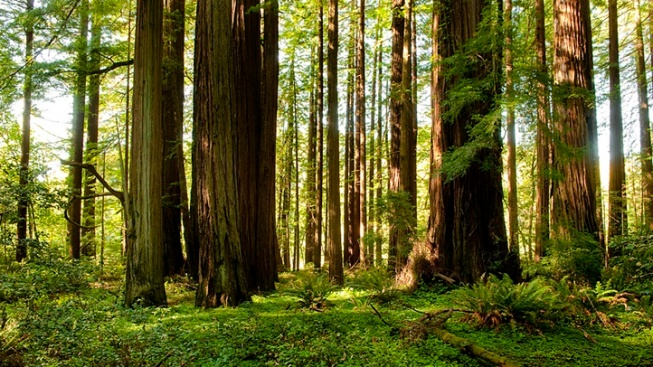 Redwoods State Parks: Free Second Saturdays in 2018