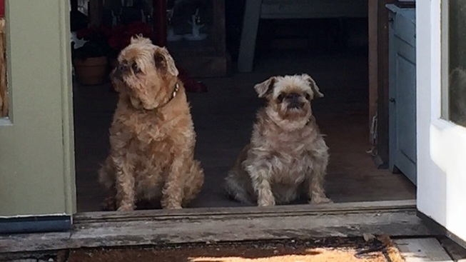 Los Olivos Adorable: Lucy & Lady