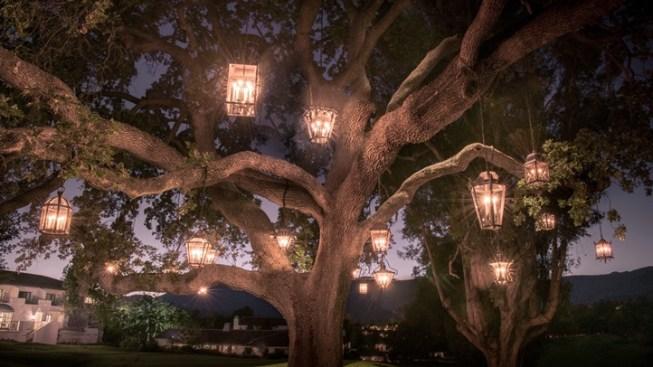 Ojai Illumination: A Tree-tastic Artwork