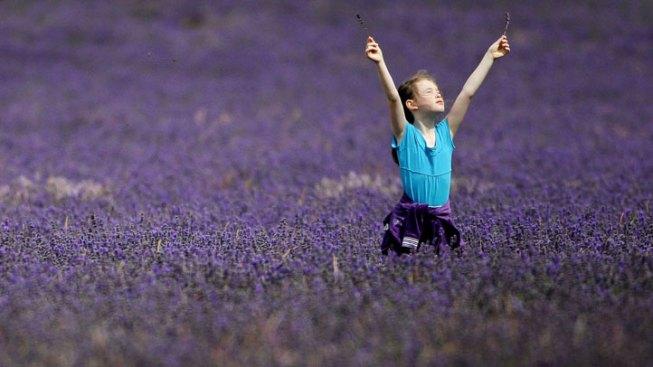 Ojai Lavender Getaway