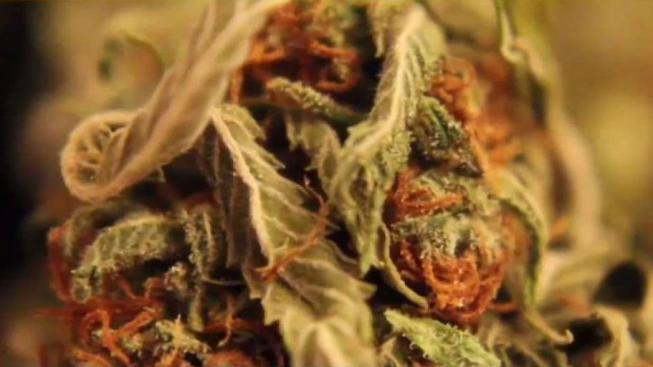 Scientists Still Trying to Find Reliable DUI Tests for Pot