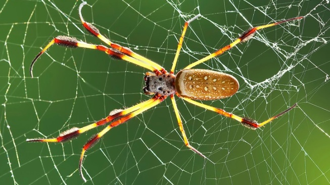 NHMLA Spider Pavilion: September Webs Ahead