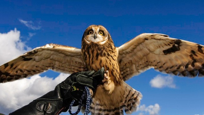 Majestic Birds: Raptor Open House