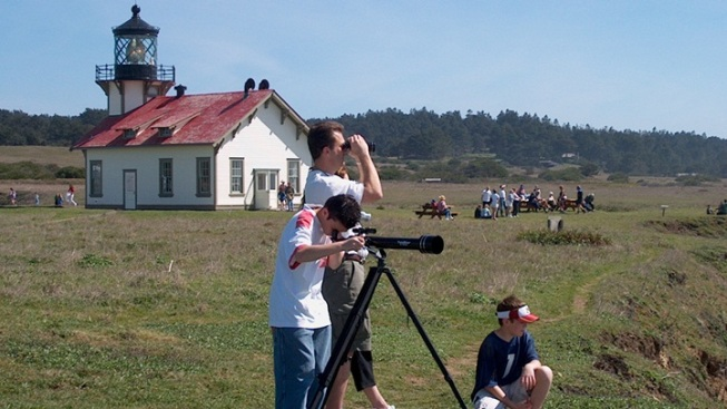 Whale Watch: Mendo Fetes the Big Mammals