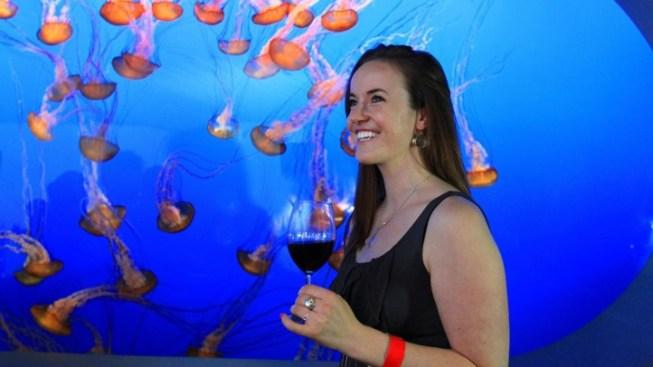 Hooray, It's Monterey Bay Aquarium's First-Ever Adult Sleepover
