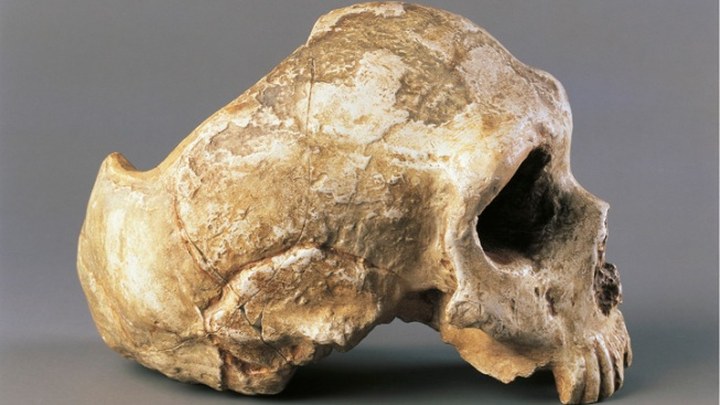 Fossils Suggest New Human Species That Feasted on Venison