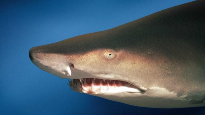 More Shark, Less Money
