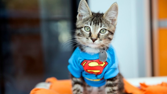 Citywide Super Adoption: Furry Love