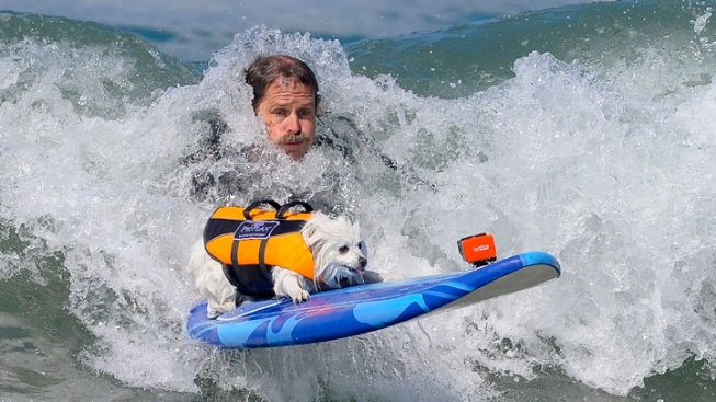 Animal Athletes: Hounds Surf in Huntington Beach