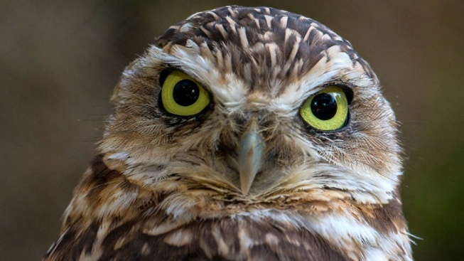 We're Owl Over the New Safari Park Live Cams