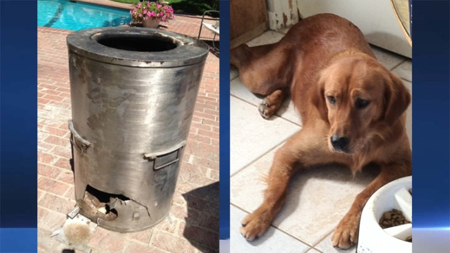 Dog Dies After Becoming Stuck in BBQ Smoker