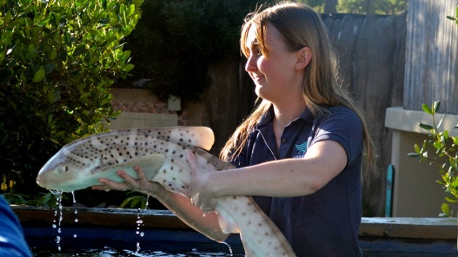 Baby Zebra Sharks Make Groundbreaking Aquarium Debut