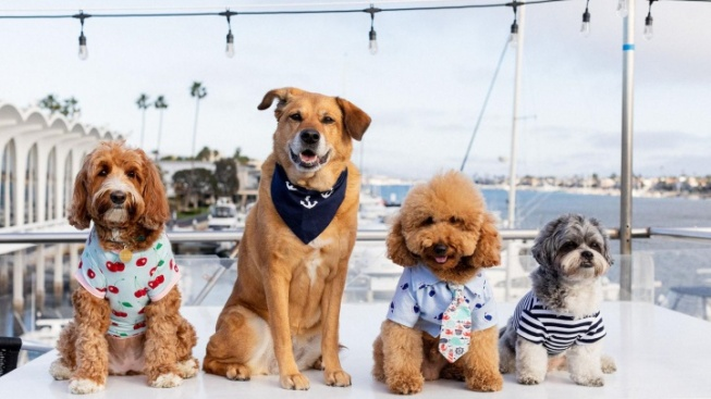 Dogs on Deck to Set Adorable Sail for a Good Cause