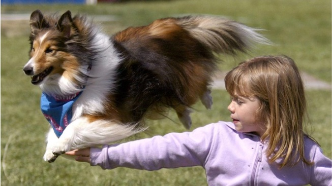'World's Largest' Pet Expo Leaps for OC