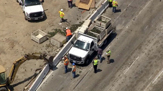 Avocado Spill Closes 5 Freeway Lanes in Pacoima