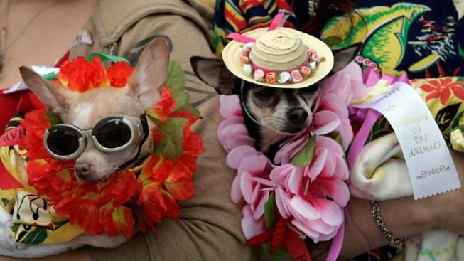 Animal Sweetness: Olvera Beastie Blessings