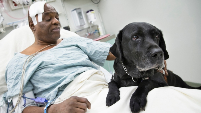 Blind Man, Dog Escape Serious Injury Under Subway Train