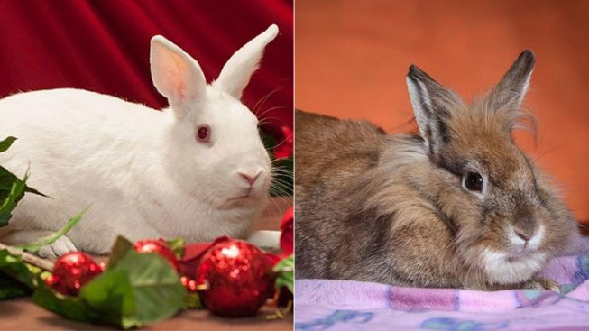 Real Bunnies Don't Make Good Easter Gifts, Officials Advise