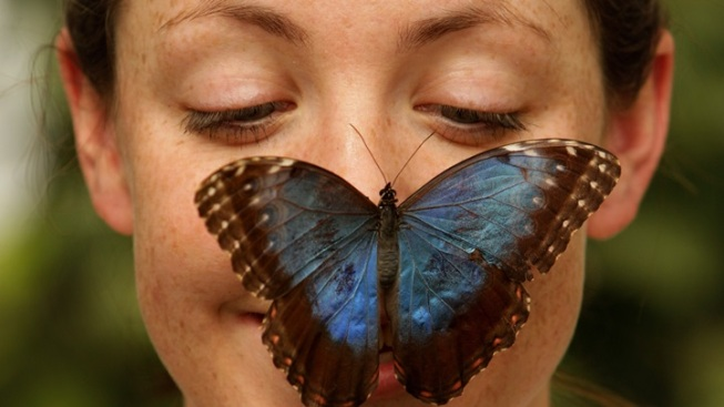 Opening: Butterfly Pavilion at NHM