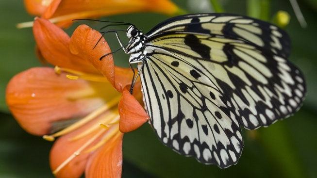 Butterfly Jungle to Soon Alight at Safari Park